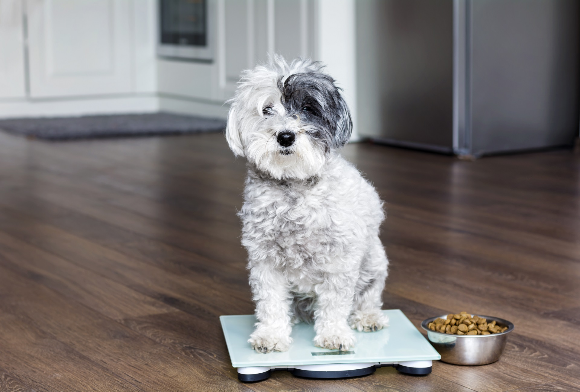 Five Steps To Managing Your Dog's Weight