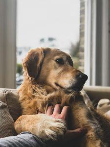 Asthma in Pets