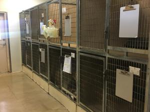 Large Kennels B res