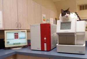 Lily on the IDEXX machine